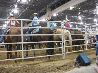 photo of rodeo horses lined by the fence