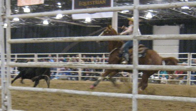 photo of rodeo cowboy roping a bull
