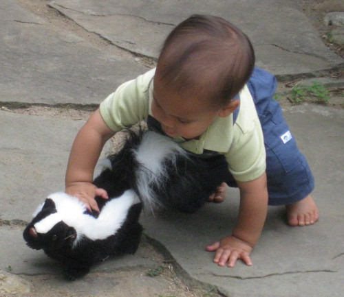 child playing with a skunk