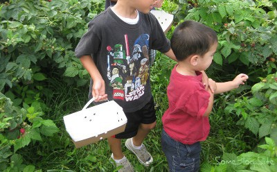 picture of children picking raspberries