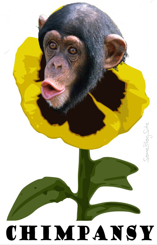 photo of a chimpanzee and a pansy combined to make a chimpansy