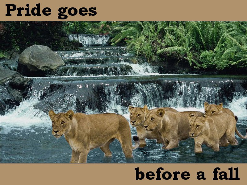 photo of a pride of lions walking in front of a waterfall - pride goes before a fall
