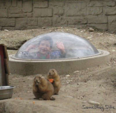 picture of prairie dog display at zoo