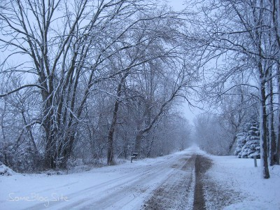 picture of winter snow on a tree-lined dirt road