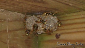 angry wasps at their nest