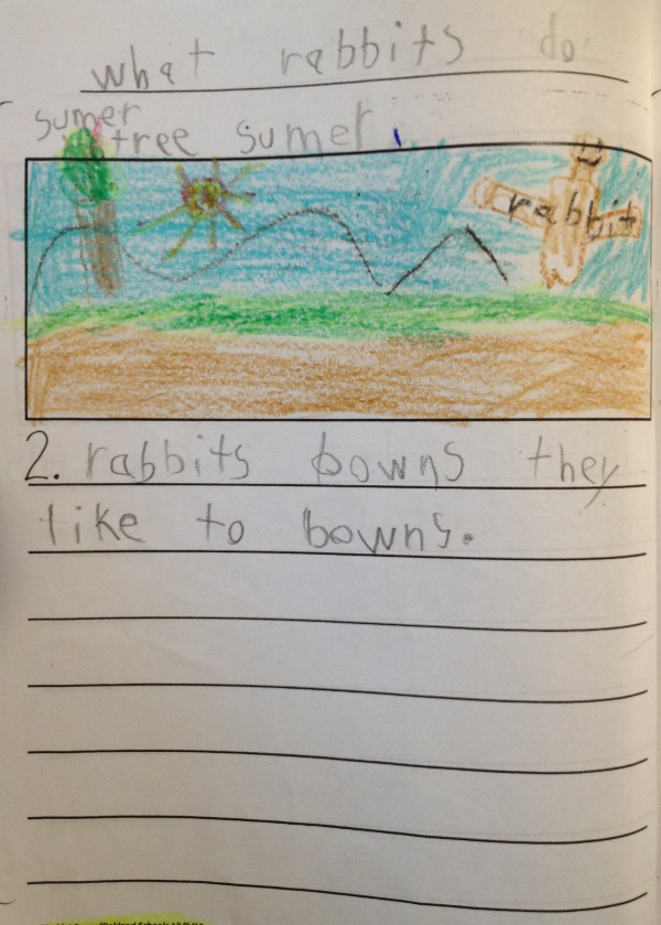 image of a kindergartener's story about rabbits, what rabbits do