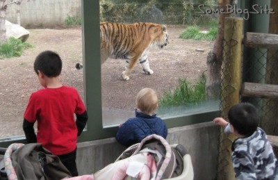 photo of children watching the tiger at Zoo Boise
