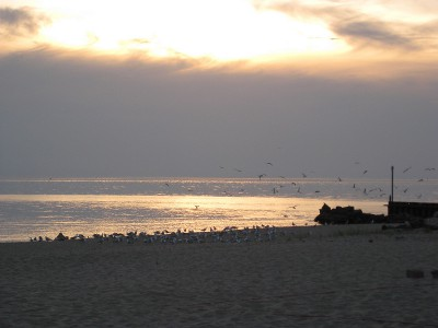 picture of a cloudy sunset on the lake with seagulls on the beach