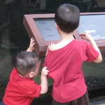picture of children looking at a tank in Shedd Aquarium