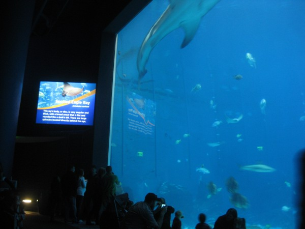 photo of the large fish tank at the Georgia Aquarium