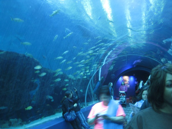 photo of the large fish tank tunnel at the Georgia Aquarium