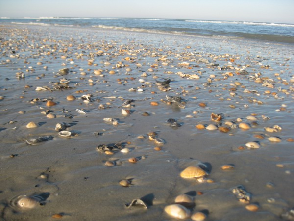 photo of shells on the beach in St. Augustine, FL