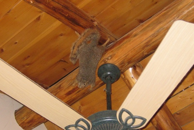 picture of a squirrel on the ceiling of a cabin