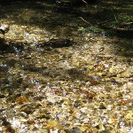 picture of a pebbles and stones in a shallow, crystal-clear creek at Iargo Springs